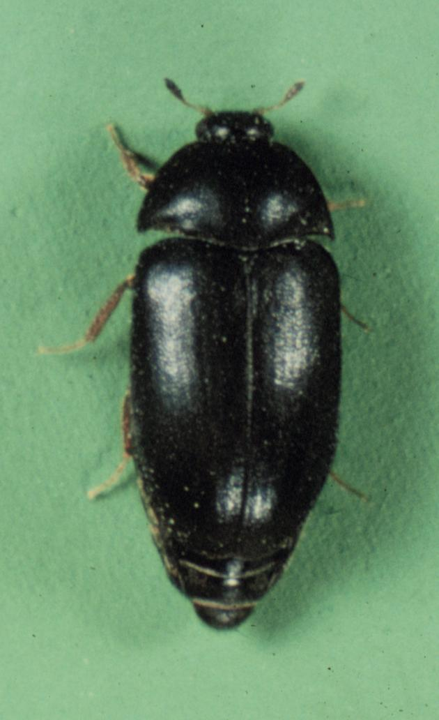 Insect Images Database Search Results